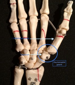 the marked area = CM 1 joint